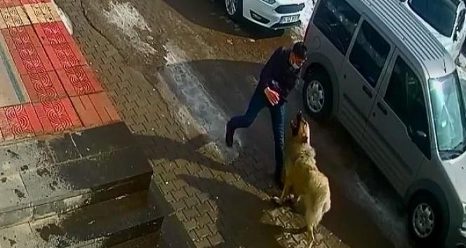 Kendisine saldıran köpeği yumruklayarak kurtuldu