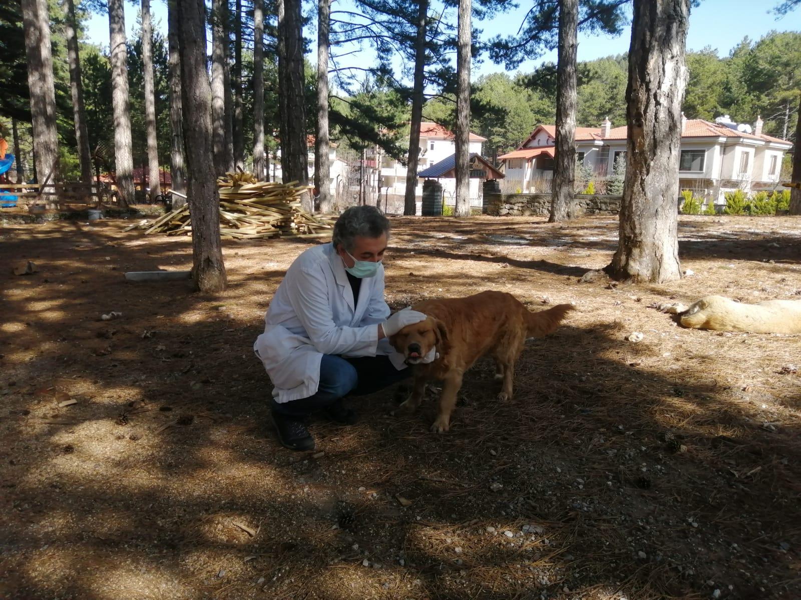Alanya'da sokak hayvanları aşılandı