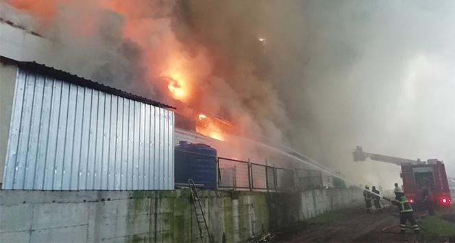 3 bin 500 metrekarelik tavuk çiftliği alev alev yanıyor