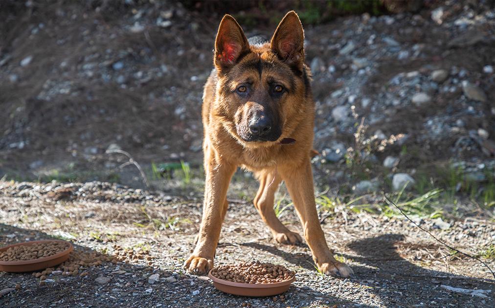 Alanya Belediyesi sokak hayvanlarının yanında olmaya devam ediyor