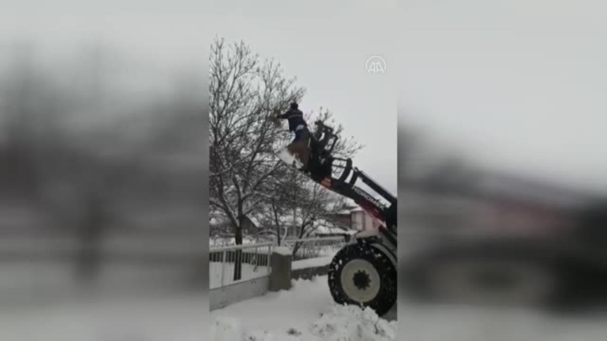 Güdül de ağaçta mahsur kalan kuşu belediye ekipleri kurtardı