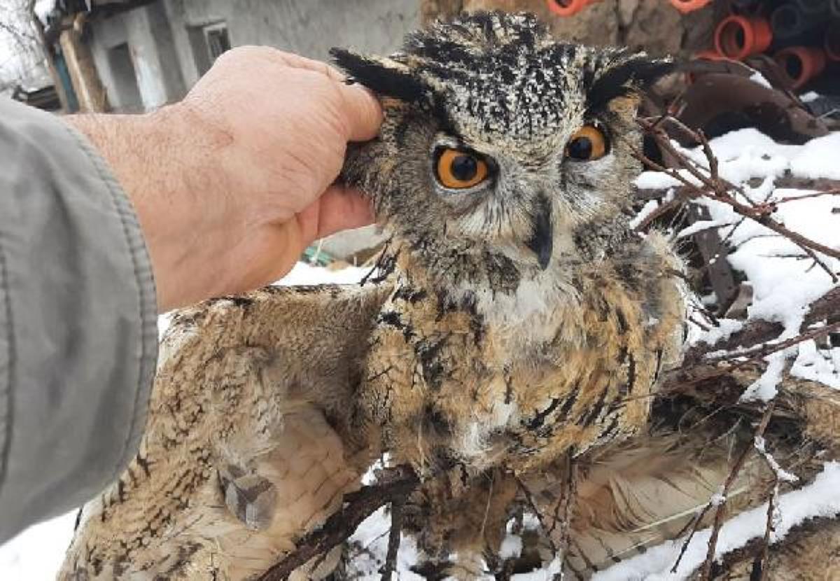Puhu, pençesinde avladığı kuşla birlikte ölü bulundu